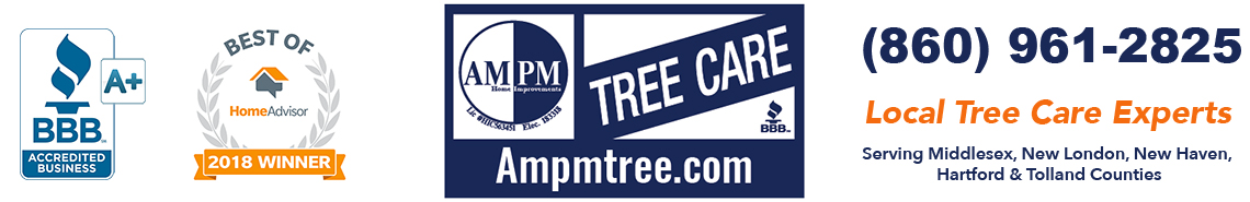 Tree Removal, Trimming & Stump Grinding