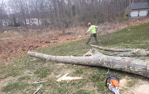 tree service east lyme ct