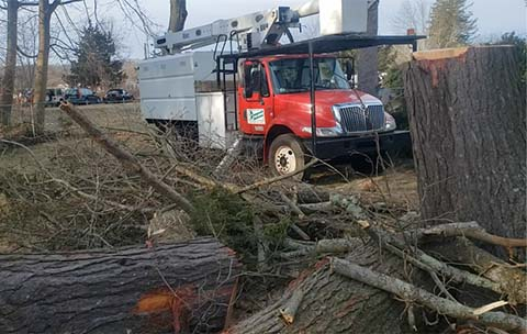 tree service norwich ct