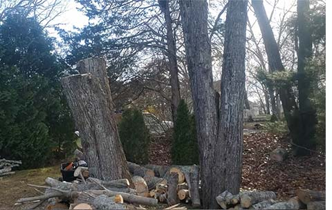tree service pawcatuck ct