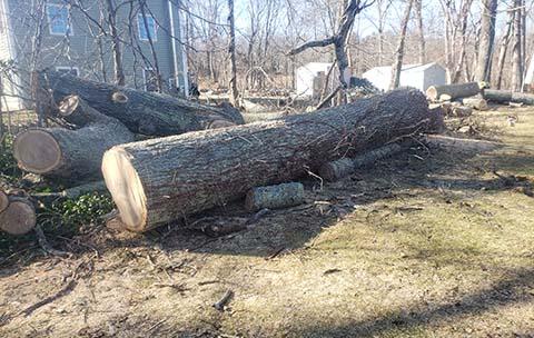 tree service quaker hill ct