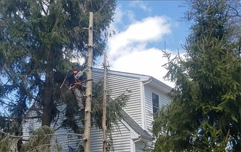 tree service westbrook ct