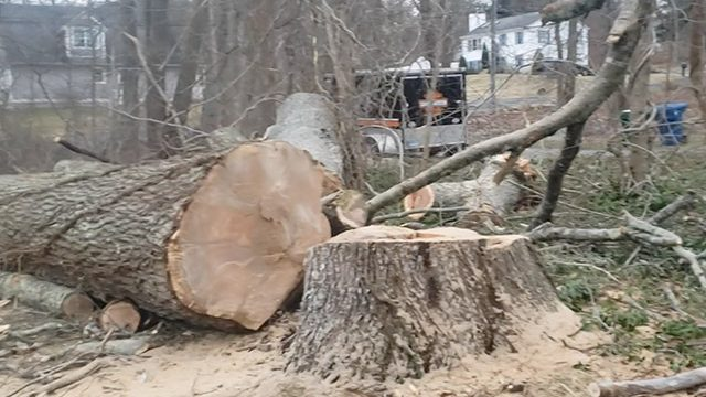 stump removal ct