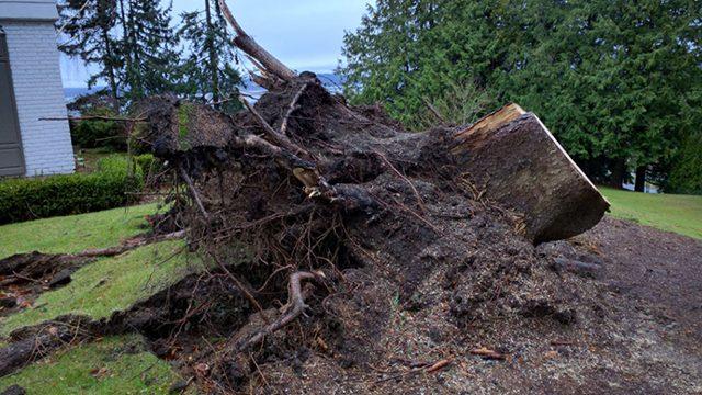 tree stump removal ct