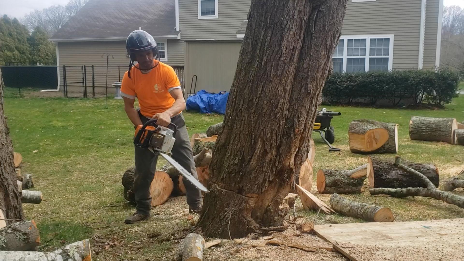 tree cutting ct
