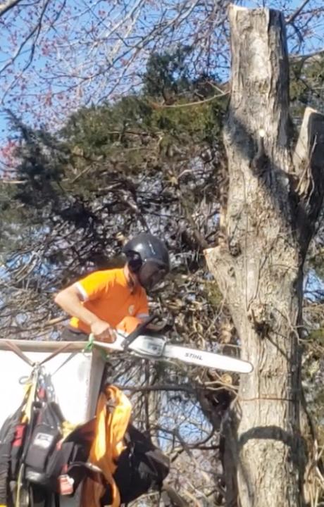 tree service ct
