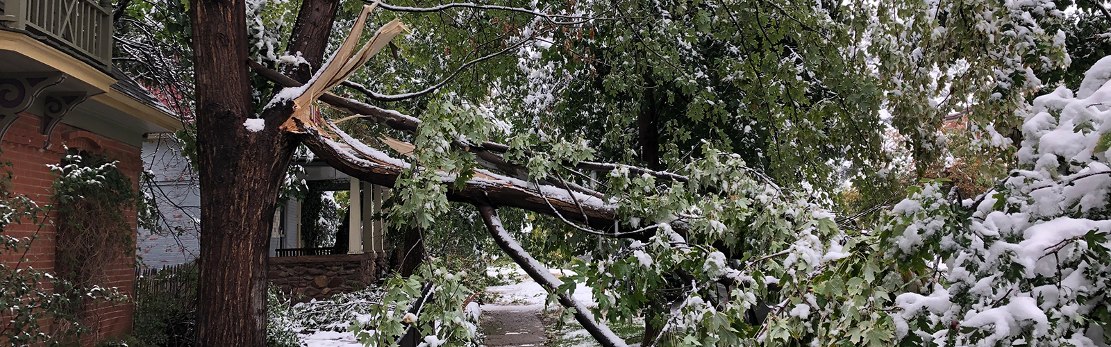 emergency tree removal ct