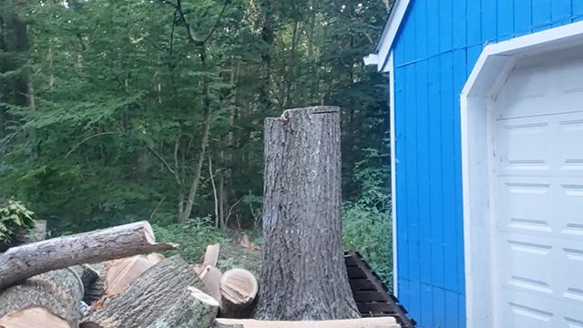 affordable tree service ct